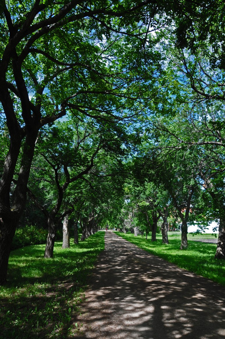 A beautiful pathway from the graveyard to the main building.