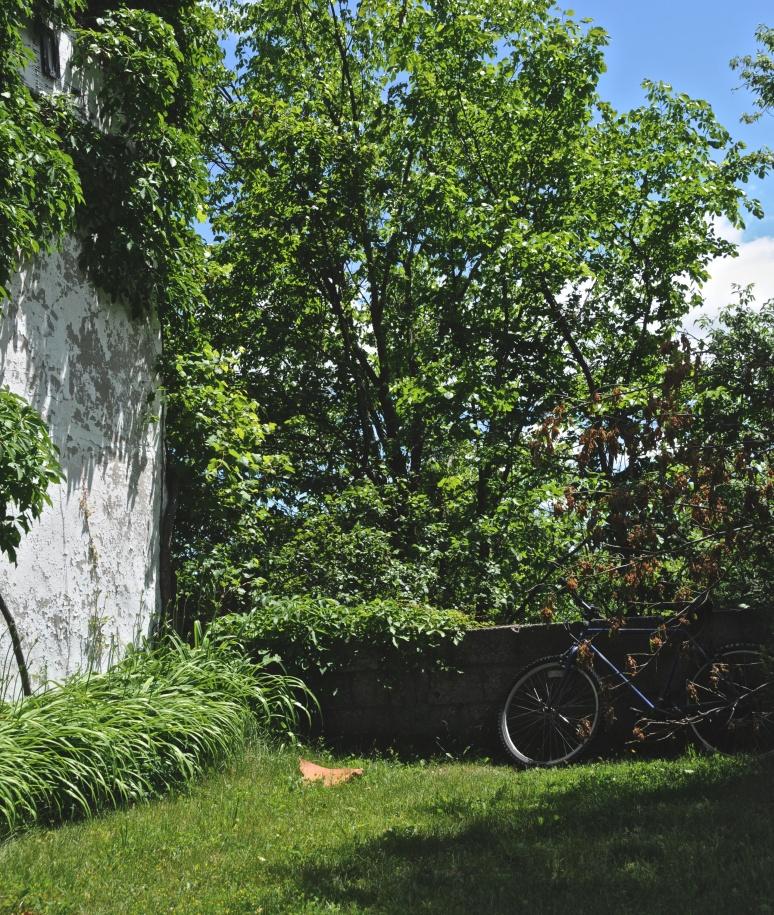 Lush in greenery